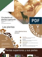 Circulación en plantas CLASE.pdf