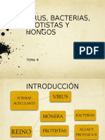 Bacterias protistas hongos 2