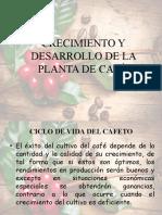 CRECIMIENTO Y DESARROLLO DE LA PLANTA DE CAFÉ.pptx