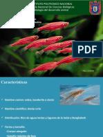 pez-cebra-final [Autoguardado].pptx