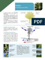Fiche-eau-agroforesterie-AFAF