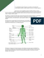 Partes y Funciones Sistema Nervioso