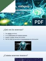 4.- Neuronas, sinapsis y neurotransmisores