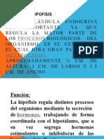 GLANDULA HIPOFISIS