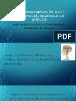 03. BN TDL 2017.pdf