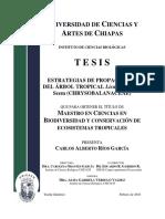 Tepezcohuite (Propagacion) PDF