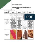 EXPERIMENTO DE LA DESCOMPOSICIÓN DE LA CARNE.docx
