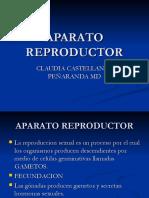 aparato reproductor11