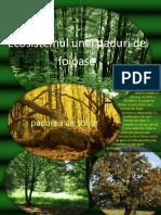 Ecosistemul-Unei-Paduri-de-Foioase