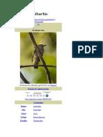 Xenops genibarbis