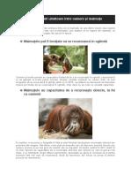 3 asemănări uimitoare între oameni și maimuțe