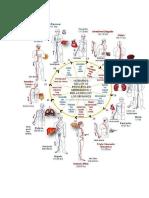 relacion organos en la medicina china