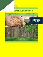 Paulownia Hybride  pour une économie verte  Maroc