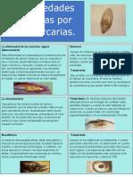 Infografia-Enfermedades por metacercarias
