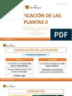 CLASIFICACIÓN DE LAS PLANTAS II  - 1RO DE SECUNDARIA