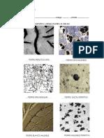 Practica Micrografias_1. (1)