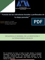 Función-de-las-estructuras-bucales-y-peribucales-de-la-etapa-Dominguez-y-Martinez