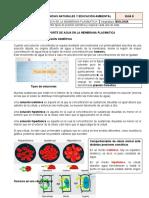 TRANSPORTE DE AGUA EN LA MEMBRANA PLASMATICA.docx