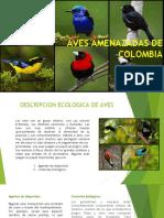 AVES AMENAZADAS DE extincion.