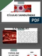 CÉLULAS SANGUÍNEAS-EXPOSICION.pptx