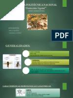 Muñoz-N.-Núñez-V.-Orden-Hymenóptera.pptx