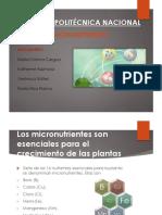 2016A-Grupo Micronutrientes.pdf