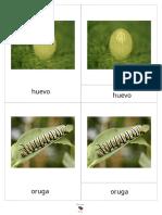 tarjetas nomenclatura ciclo de la mariposa