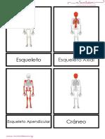 esqueleto-humano-letra-imprenta.pdf