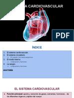 Copia de SISTEMA CARDIOVASCULAR.pdf
