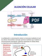 04A Señalizacion intracelular.pptx