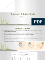12 va clase División Charophyta.pptx