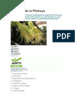 El cultivo de la Pitahaya.docx