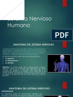 Sistema Nervioso Humano_I_2020 (2).pdf