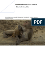 Population status of Rhesus Macaques