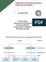 Mecanismos de acción hormonal_Radi 2019 para PDF