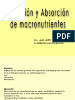 digestionabsorcion_2019_LC