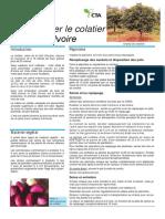 FICHE TECHNIQUE DU COLATIER.pdf