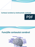 curs cortex