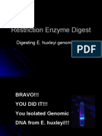 Restriction Enzyme Digest