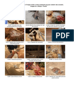 maladies des poules