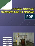 Fluxul Tehnologic de Sacrificare La Bovine