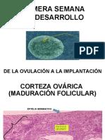 11.- MADURACIÓN DEL ÓVULO.ppt