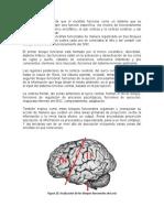 FUNCIONES_CORTICALES,_MAPA_DE_BRODMAN