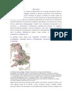 GEOLOGIA HISTORIA.docx