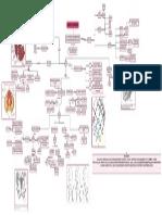 Anatomía del canal de parto