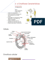 11. Chryso, Silico, Eustigma, Raphido y Syburo.pdf