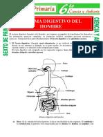 Sistema-Digestivo-del-Hombre-para-Sexto-de-Primaria.doc