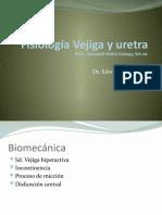 Fisiología Vejiga y uretra