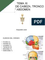 TEMA XI ANATOMÍA DE CABEZA Y TRONCO