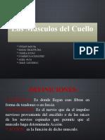 msculosdelcuello-121107180457-phpapp01